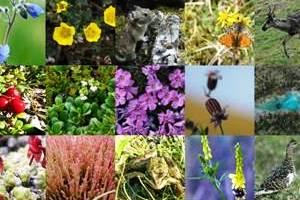 Taksonomi dan Biodiversitas Indonesia