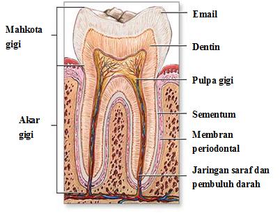 Ed05-kesehatan-1