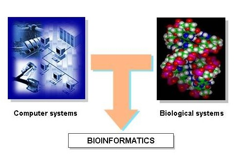 Hubungan antara Ilmu Komputer, Biologi dan Bioinformatika. (gambar dari http://cropwiki.irri.org)