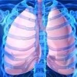 Respirasi: Proses Barter Udara