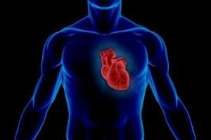 Jantung Kita