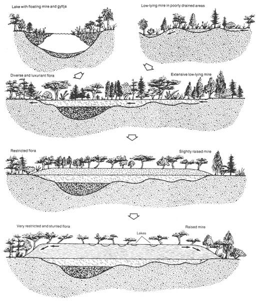 Contoh evolusi mire yang menunjukkan pembentukan raised bog (McCabe, 1987).