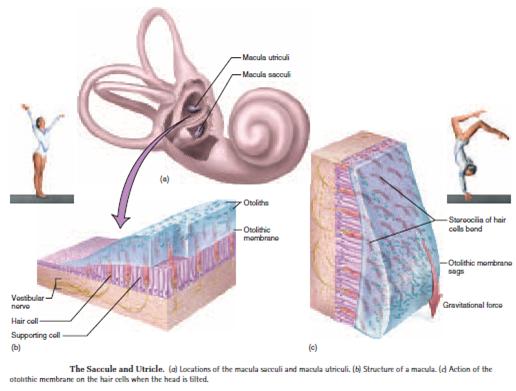 Ed10-biologi-3