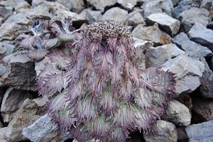 Tumbuhan-tumbuhan yang Berkamuflase