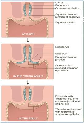 Ed15-kesehatan-3