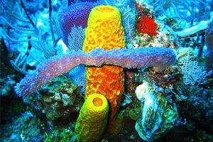 Berkenalan dengan Filum Asal SpongeBob: Porifera