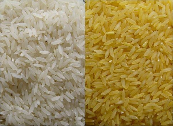 Perbandingan beras normal (putih) dan Golden Rice (kuning). Gambar dari: http://www.goldenrice.org/
