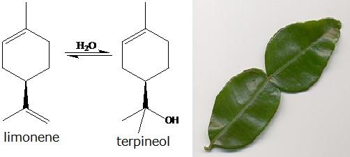 Senyawa limonene dan terpineol dalam daun jeruk purut.