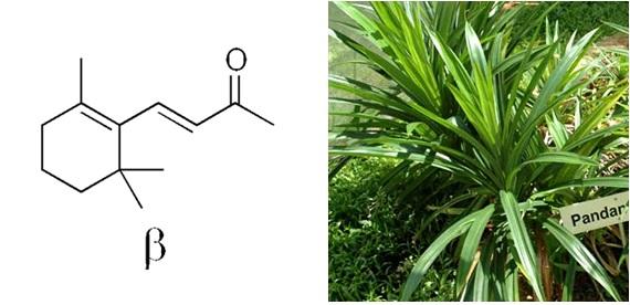 Senyawa β-ionone yang berasal dari daun pandan.