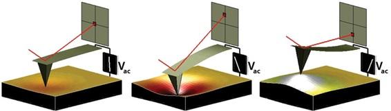 Gambar 1: Prinsip dasar kerja PFM yang bergantung pada arah dan besar medan listrik yang diberikan pada suatu material yang mengandung sifat feroelektrik. Sumber gambar: http://www.asylumresearch.com