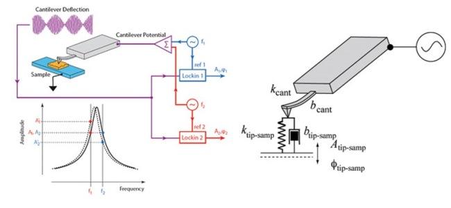 Gambar 2: Cara kerja PFM yang digunakan untuk menganalisis piezoresponse yang dihasilkan dari material feroelektrik. Sumber gambar: http://www.asylumresearch.com