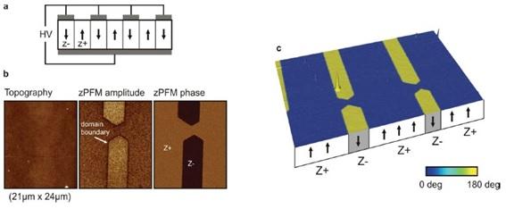 Gambar 3: Contoh citra hasil analisis PFM dari material LiNbO3 single crystal. Sumber gambar: http://www.jpk.com