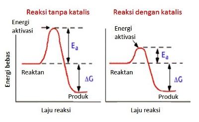 Laju reaksi kimia dengan dan tanpa katalis (dalam hal ini enzim).