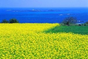 """Mengintip """"Pulau Surga"""" di Korea Selatan"""