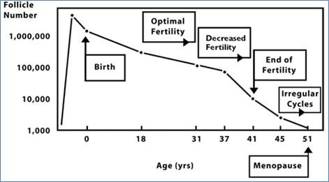 Skema dinamika jumlah folikel primordial terhadap usia seorang wanita.Sumber gambar: Sherman Silber. Treating Infertility, 2006 (gambar disadur dari Te Velde et al., 1998).