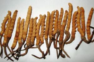 Cordycepin: Antikanker dari Jamur