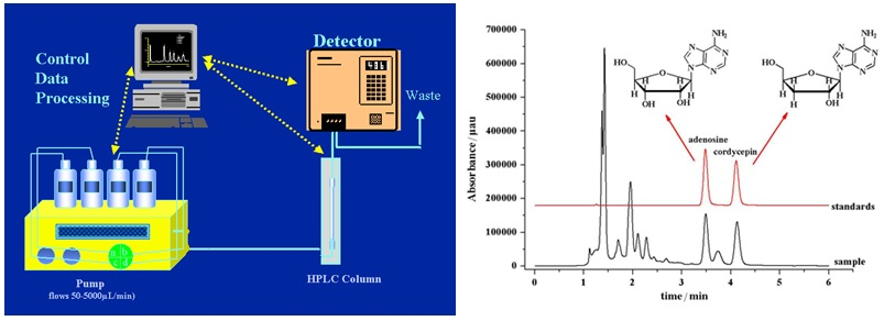 Instrumen HPLC (High Performance Liquid Chromatography) dan contoh hasil analisis cordycopin dengan HPLC.
