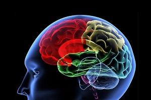 Sistem Navigasi di Dalam Otak