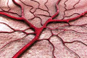 Pembentukan Pembuluh Darah (Angiogenesis)