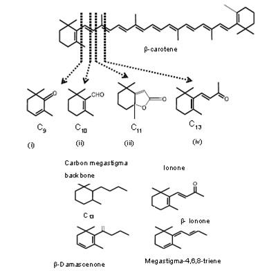 Degradasi senyawa karotenoid. Gambar atas: Pembentukan senyawa flavor turunan karotenoid dari salah satu karoten yaitu b-carotene (i) 2,2,6-trimethylcylohexene-1-one; (ii) b-cyclocitral; (iii) dihydroactinidiolide/DHA dan (iv) b-ionone. Gambar bawah: Struktur kimia dari senyawa flavor turunan karoten dengan struktur mega stigma.