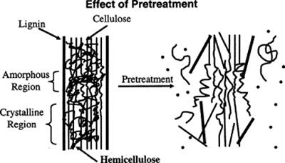 Gambar skematik proses degradasi lignin (delignifikasi). Lignin yang mengikat kuat selulosa perlu diberikan pretreatment (pengolahan awal). Pengolahan awal ini dapat dilakukan secara biologis menggunakan enzim lakase dari beberapa jenis jamur pelapuk. Sumber gambar: Penelitian Hsu dkk. (1980) dalam buku yang disunting Mosier dkk. (2005).