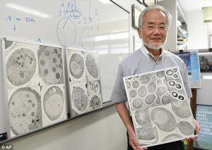 Profesor Ohsumi dan gambar autofagosom.