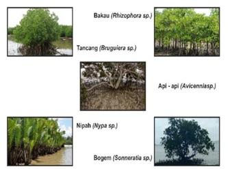 Jenis Mangrove di Indonesia. Sumber: http://uksa387.undip.ac.id/ingin-mengenal-tentang-mangrove/
