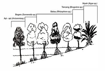 Zonasi Tumbuhan Hutan Mangrove. Sumber: http://uksa387.undip.ac.id/ingin-mengenal-tentang-mangrove/