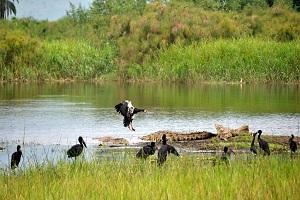 Menjaga Keseimbangan Ekosistem untuk Kebaikan Seluruh Makhluk Hidup