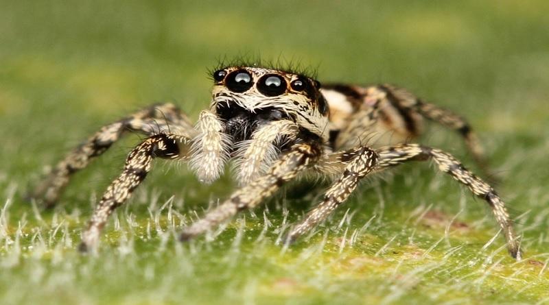 Mengungkap Kehidupan Laba-laba