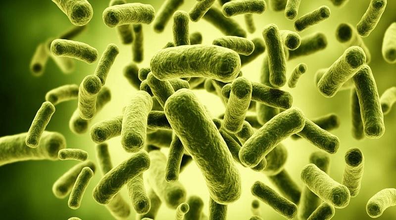 Tidak Semua Bakteri Itu Jahat