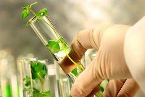 Belajar Sintesis Kimia dari Alam Sekitar