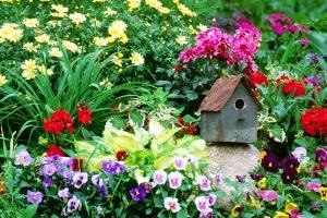 Berkebun di Belahan Bumi Berbeda: Menebar Semangat Berkebun
