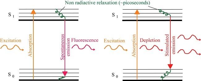 Gambar kiri: Proses absorpsi dan emisi cahaya pada material. Cahaya yang diabsorbsi akan membuat electron di material tersebut tereksitasi. Kemudian, pada saat electron tersebut kembali ke keadaan dasar, cahaya akan diemisikan dari material tersebut berupa fluoresensi. Gambar kanan: Proses terjadinya emisi terstimulasi yang merupakan prinsip dasar laser. Pada saat electron material tersebut tereksitasi, terjadi interaksi antara electron tereksitasi tersebut dengan foton cahaya lain, sehingga menstimulasi proses kembalinya electron ke keadaan dasar lebih cepat. Akibatnya, diemisikanlah foton cahaya yang menyerupai foton cahaya yang berinteraksi tersebut.