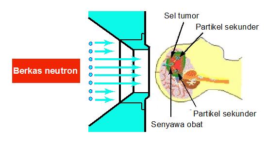 Diagram proses Neutron Capture Therapy (sumber: http://www.jaea.go.jp/jaeri/english/press/991025/fig03.html).