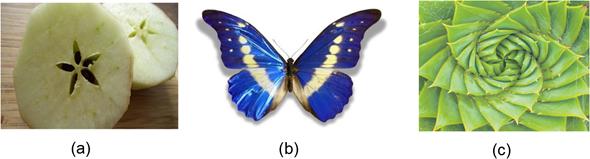 Contoh-contoh simetri yang dapat ditemukan di alam: (a) simetri radial berbentuk bintang pada buah apel, (b) simetri bilateral pada sayap kupu-kupu, (c) simetri spiral Fibonacci pada daun lidah buaya.
