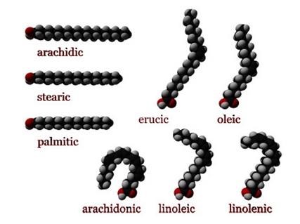 Gambar 3. Struktur jenis asam lemak (sumber: http://en.wikipedia.org/wiki/Fatty acid).