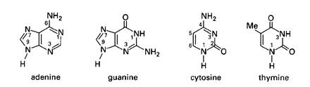 Struktur Kimia beberapa Basa Nitrogen penyusun DNA.