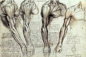 Belajar Anatomi Bersama Da Vinci