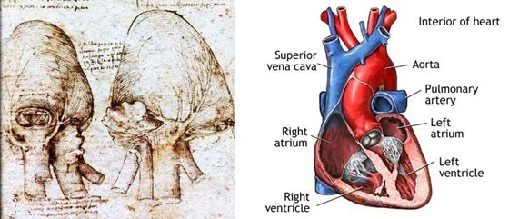 Gambar anatomi jantung versi Da Vinci (kiri) dan versi modern (kanan). Sumber gambar: http://www.italian-renaissance-art.com dan http://www.healthcentral.com.