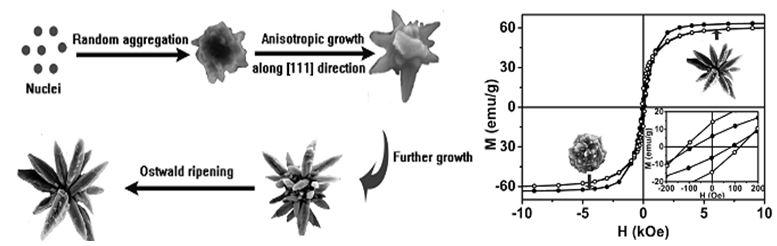 Gambar tahap-tahap pertumbuhan kristal Ni-Fe alloy nanoflower.
