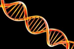 Mekanisme Replikasi DNA
