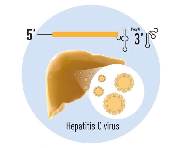 Nobel Bidang Kesehatan 2020: Hepatitis C